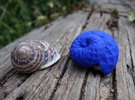Snail Shell in Blue Strong & Flexible Polished