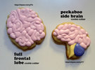 Full Frontal Lobe Cookie Cutter in White Strong & Flexible