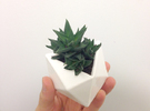 Poly Plant M in White Strong & Flexible Polished