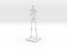 "6"" Desktop Skeleton in White Strong & Flexible"