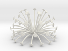 seed head 11   boolean (fixed) in White Strong & Flexible