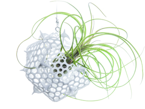 Radiolaria Platonica Planter in White Strong & Flexible