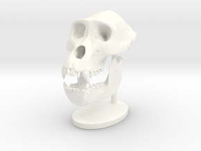 Gorilla Skull with base in White Strong & Flexible Polished