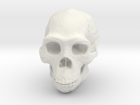 Real Skull : Homo rectus (Scale 1/4) in White Strong & Flexible