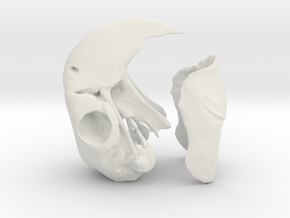 Macaw Skull in White Strong & Flexible