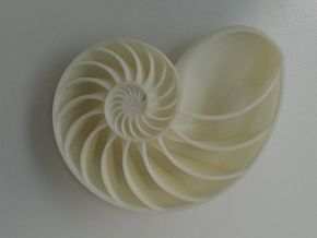 Spiraling Nature | Nautilus Shell in Sandstone