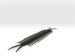 Articulated Centipede (Scolopendra sp.) in Black Strong & Flexible