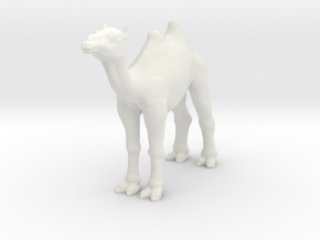 Camel in White Strong & Flexible