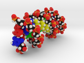 DNA Molecule Model