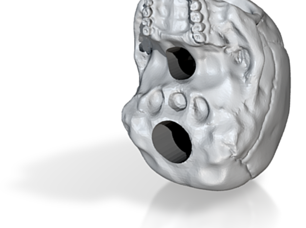 Human Skull (no jaw) 8 inch scale 3d printed