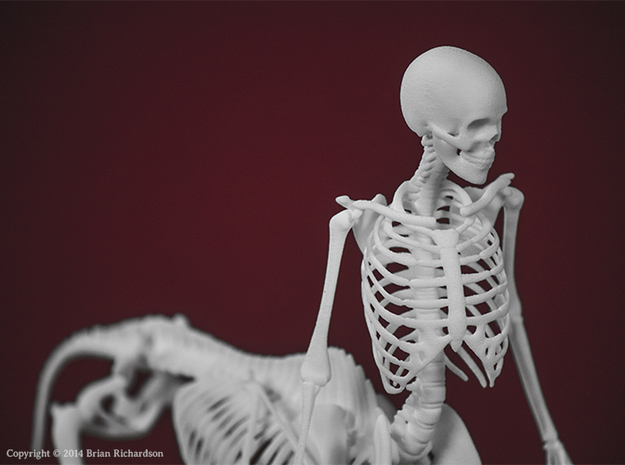 Centaur Skeleton 3d printed