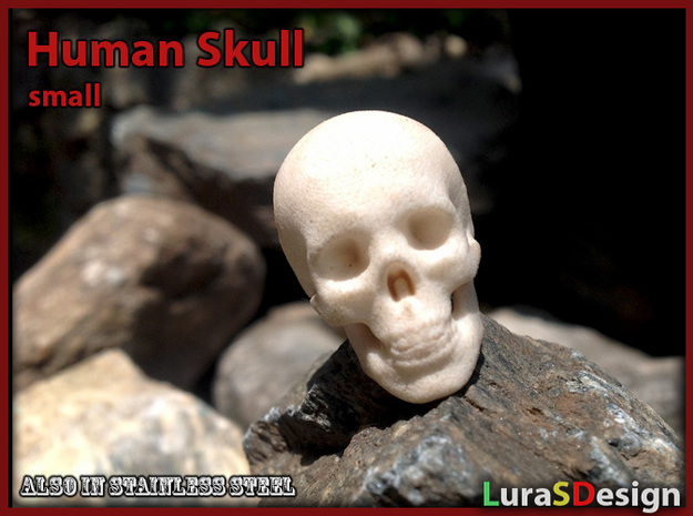 Skull - Human, small 3d printed A print of the previous version, the new one looks even better !
