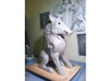 """Small Boar 3d printed Photo of """"Torc"""" sculpture - July2013"""