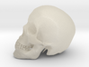 Detailed Human Skull (Life sized) 3d printed
