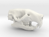 Mouse Skull 3d printed