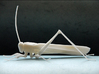 Articulated Katydid 3d printed