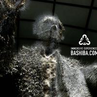 BASHIBA