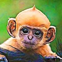 Model_Monkey