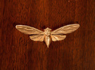 Raw Brass Cicada in Raw Brass