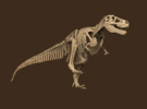 Tyrannosaurus Skeleton Sue 40 cm long.  in White Strong & Flexible