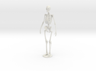 Skeleton new in White Strong & Flexible