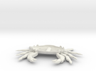 crab ventral in White Strong & Flexible