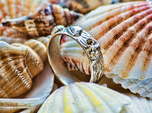 Sea Shell Ring 1 - US-Size 8 (18.19 mm)