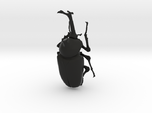 Articulated Rhino Beetle (Allomyrina dichotoma)