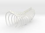 Komodo Spine Rib Cage 1:5 Scale