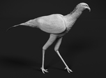 Secretarybird 1:6 Walking