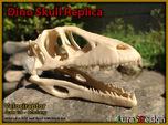 Dino Skull - Raptor Replica