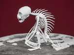 Chupacabra Skeleton