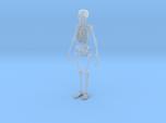 Free Standing Skeleton Figure