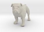 Bulldog L Full Color Sandstone
