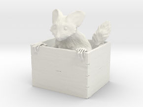 Ayeaye in a Box in White Natural Versatile Plastic