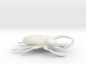 Atlas Beetle figurine/brooch in White Natural Versatile Plastic