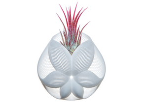 Bulbophyllum Simplex Planter in White Strong & Flexible