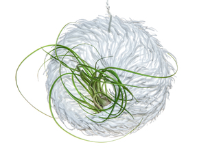 Bulbophyllum Mobius Planter in White Strong & Flexible