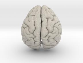 Orangutan Brain in Natural Sandstone