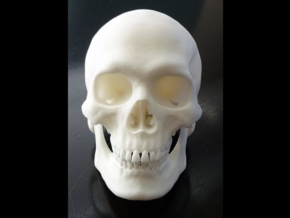 Realistic Human Skull With Removable Jaw V.2.00 in White Natural Versatile Plastic