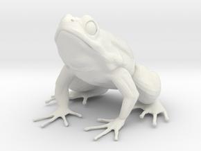 Large Frog Print in White Natural Versatile Plastic