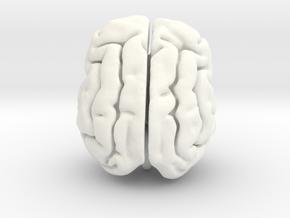 Cheetah brain in White Processed Versatile Plastic