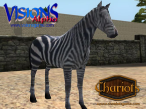 Zebra in Full Color Sandstone