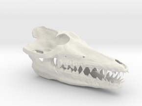 Pakicetus skull in White Natural Versatile Plastic