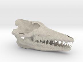 Pakicetus skull half size in Natural Sandstone
