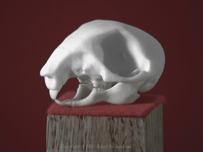 Squirrel Skull in White Processed Versatile Plastic