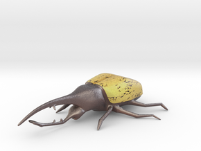 Hercules Beetle Color in Full Color Sandstone