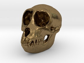 SPIDER MONKEY SKULL - ACTUAL SIZE in Natural Bronze