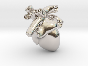 Anatomical Heart Pendant in Rhodium Plated Brass
