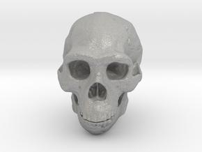 Real Skull : Homo erectus (Scale 1/1) in Aluminum